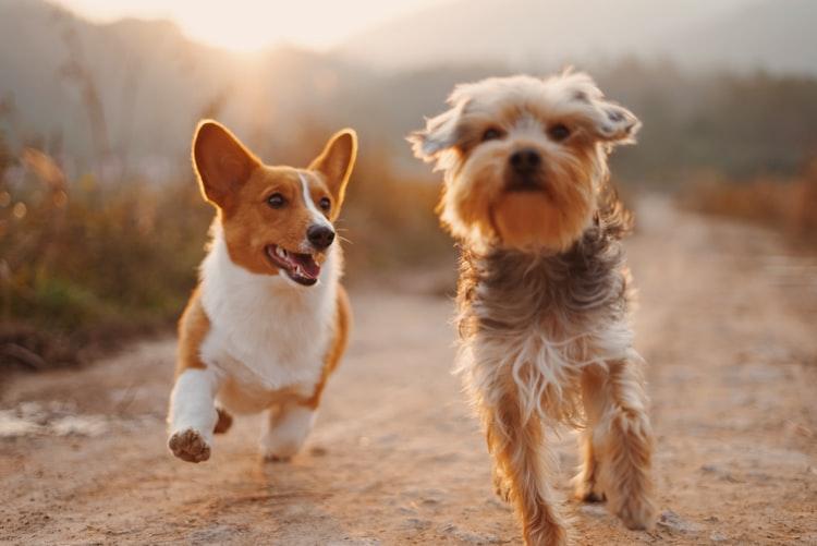 top pet insurance